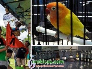 Lovebird Puspa