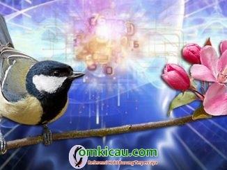 Terapi burung dengan audio binaural