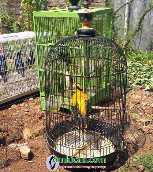 burung liar tidak dilindungi
