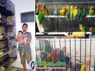 Ody Lovebird Farm