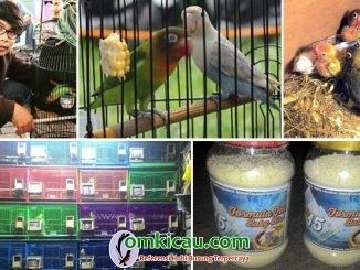 RCG15 Bird Farm