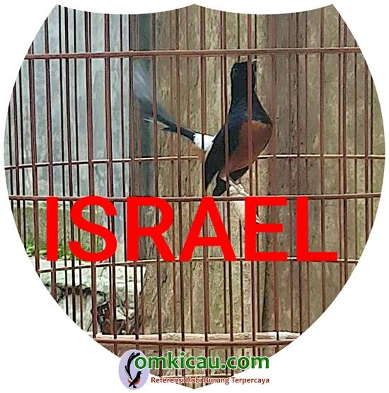 murai batu Israel