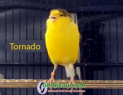 Kenari Tornado