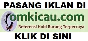 PASANG IKLAN DI OMKICAU.COM