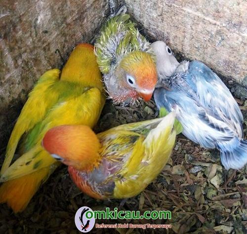 Clourit Bird Farm