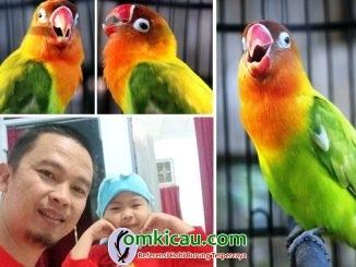 lovebird Bom Bom