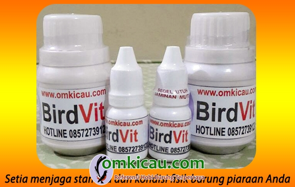 BirdVit