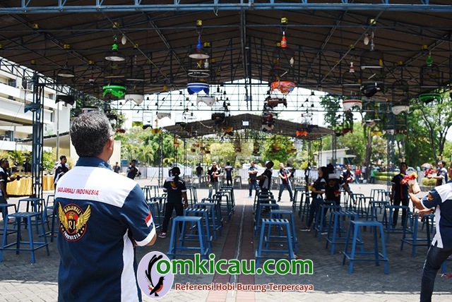 Piala Jawa Timur - kelas lovebird
