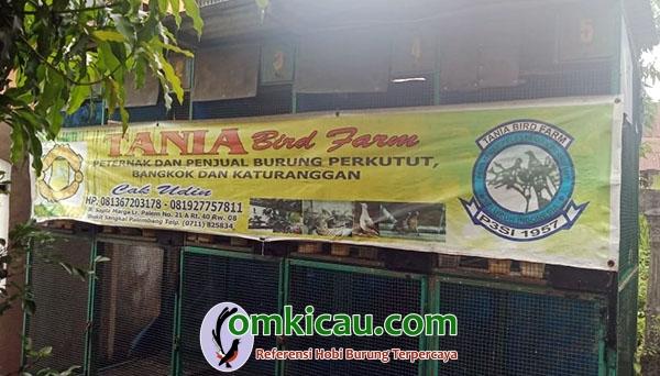 Tania BF Palembang