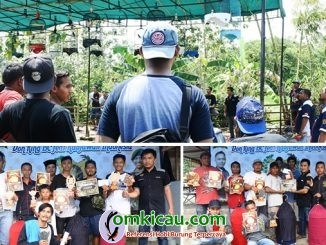 Latpres Don King BC