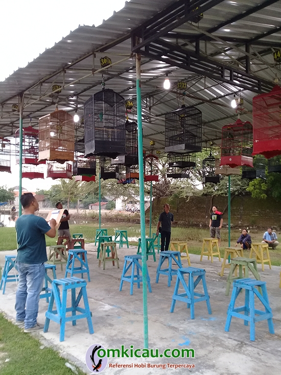 lomba burung di Tuban