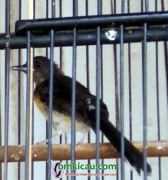 Syadam Bird Farm
