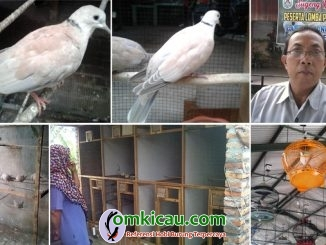 HW Bird Farm Ngawi