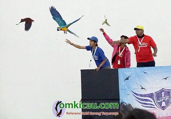 Kontes free fly