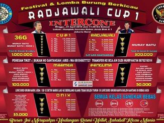 Radjawali Cup 1 Intercone
