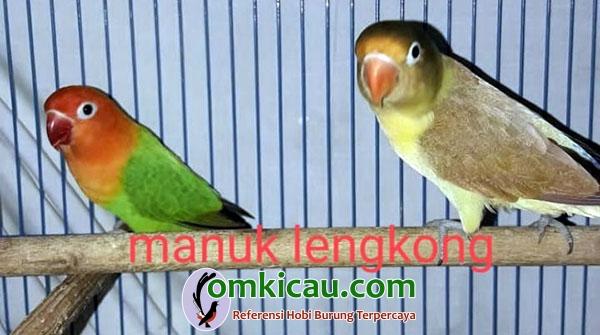 ternak lovebird warna