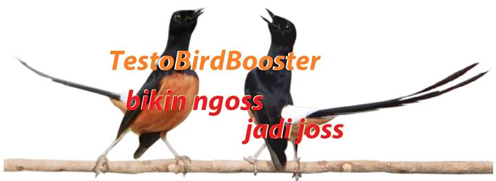 TestoBirdBooster bikin burung ngos jadi jos