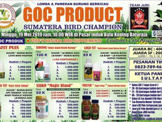 GOC Product Sumatera Bird Champion