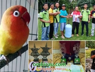 Lovebird D3NOQ