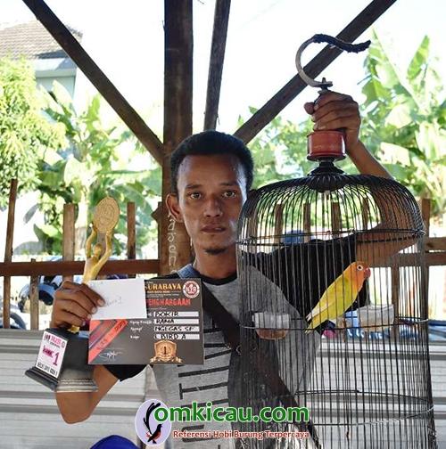 lovebird Bokir
