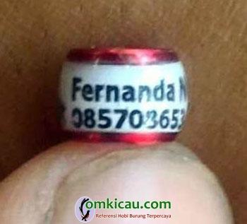 Fernanda BF